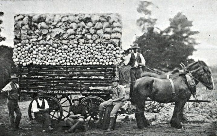 Horse-drawn wagon carrying produce - Ask.com