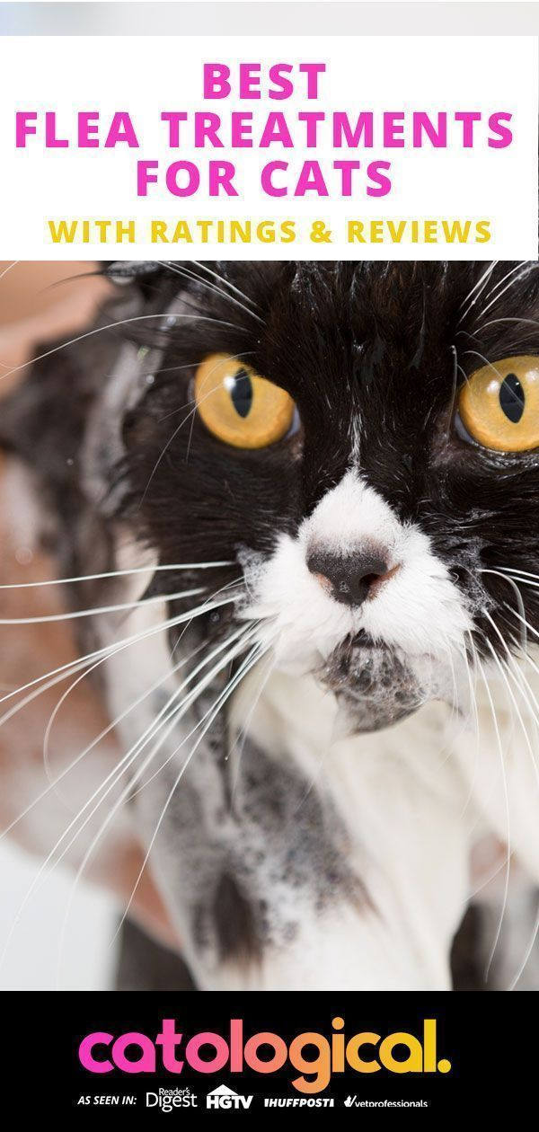 Details Of Cat Flea Signs Symptoms Guide Pets News And Review