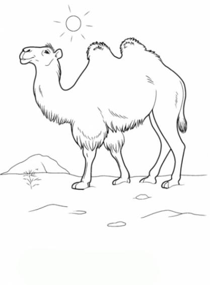 Kamel Malvorlagen Ausmalbilder Kamel Malvorlagen Ausdrucken 1 Vorlagen