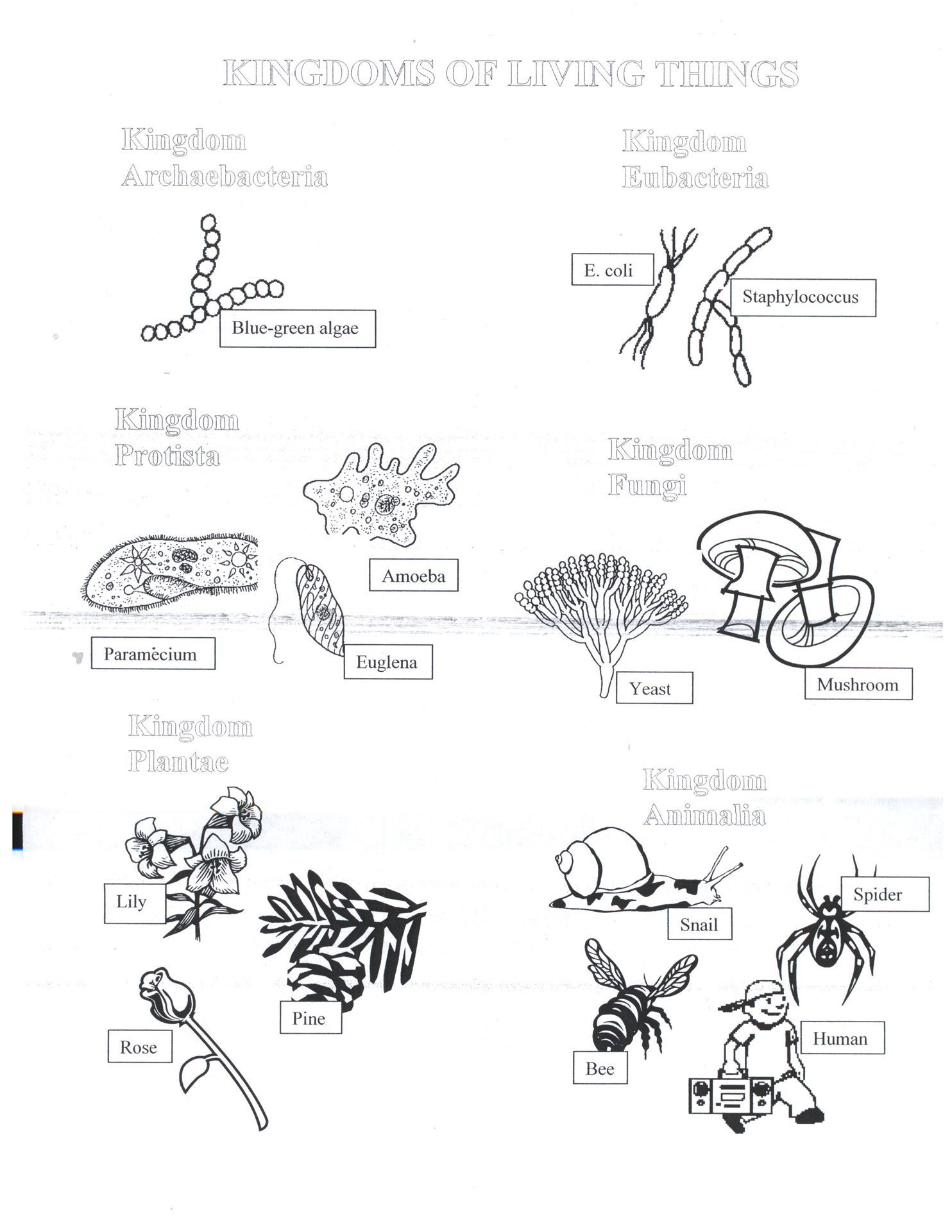 Six Kingdoms Coloring Worksheet | Biology IN | Pinterest