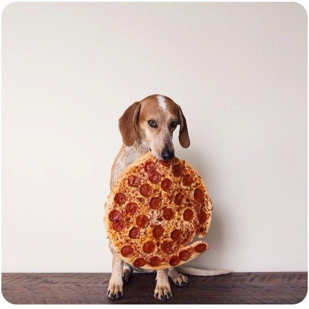 Картинка с собакой с пиццей в зубах #картинки #фото # ...