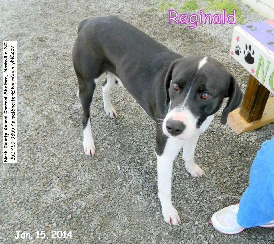 19 hounds surrendered in to Nashville Humane Association