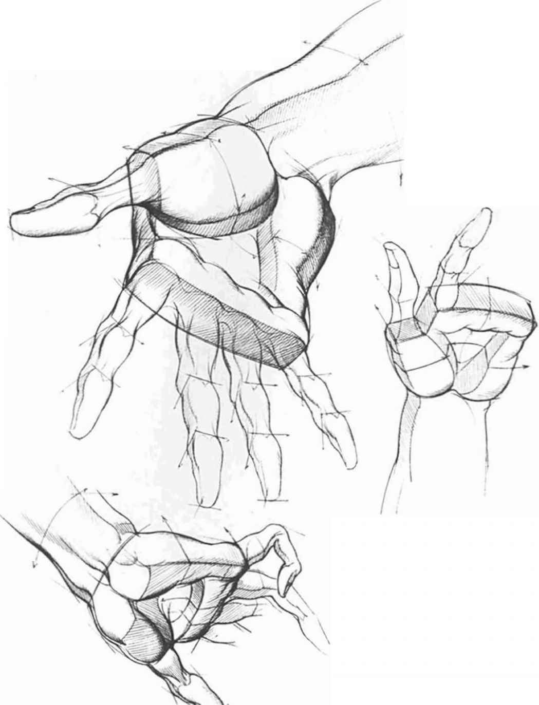 Drawing The Hand Different Position | Drawing | Pinterest | Anatomy ...