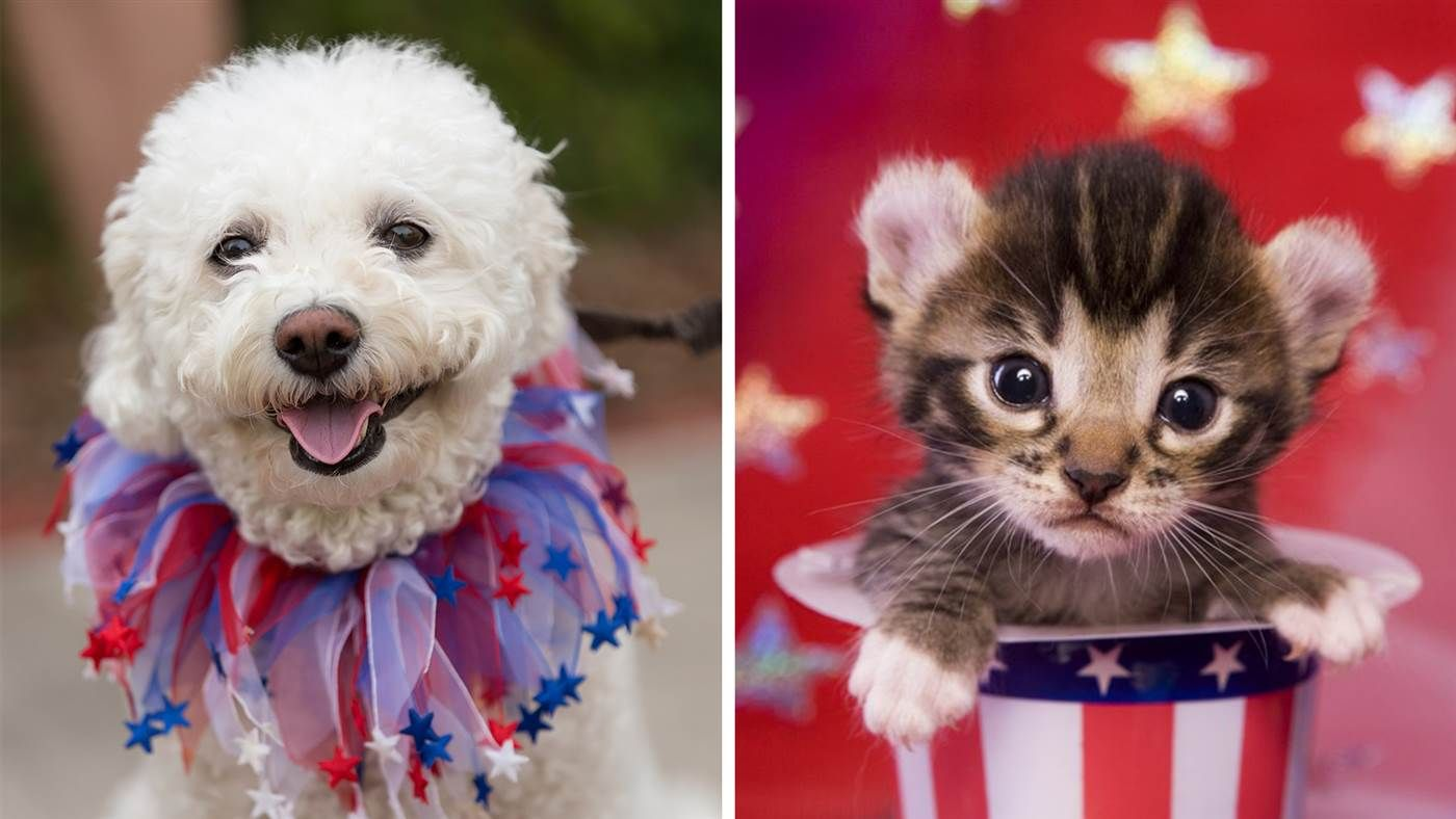 Protect Your Pet During Fireworks With 10 Tips From Jackson Galaxy And Others Pets Your Dog Your Pet