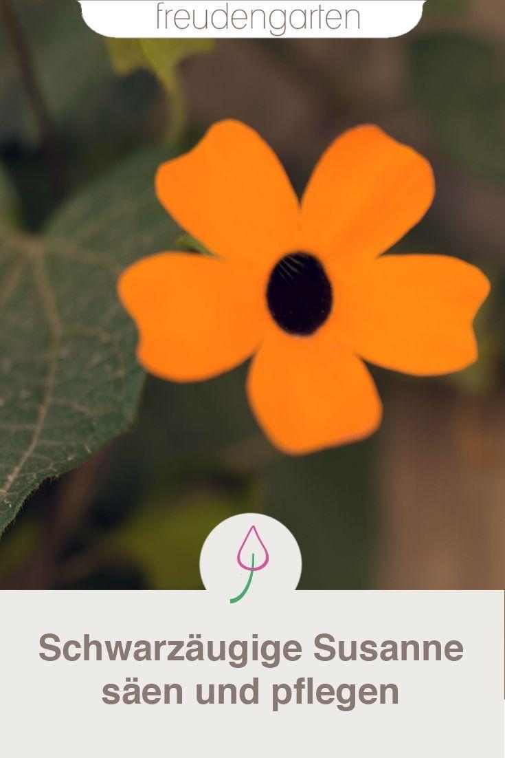 schwarz ugige susanne freudengarten blog garden. Black Bedroom Furniture Sets. Home Design Ideas