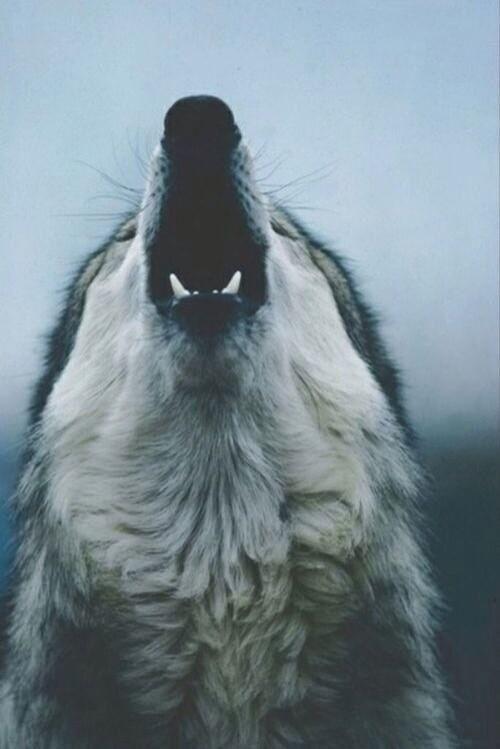 Wallpaper Iphone Wolf Best 50 Free Background