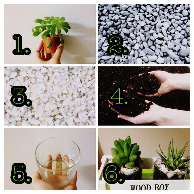 DIY Como hacer macetas para cactus pequeños con vasos de ...