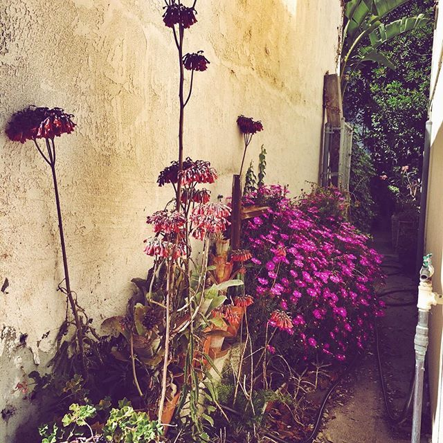 Well done! #alley #garden #swag #styles #shopping #outfitoftheday