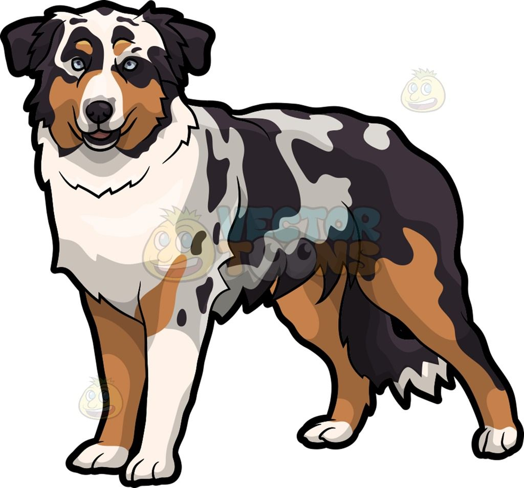 An Australian Shepherd Dog Cartoon Stock Clip Art Vector Toons