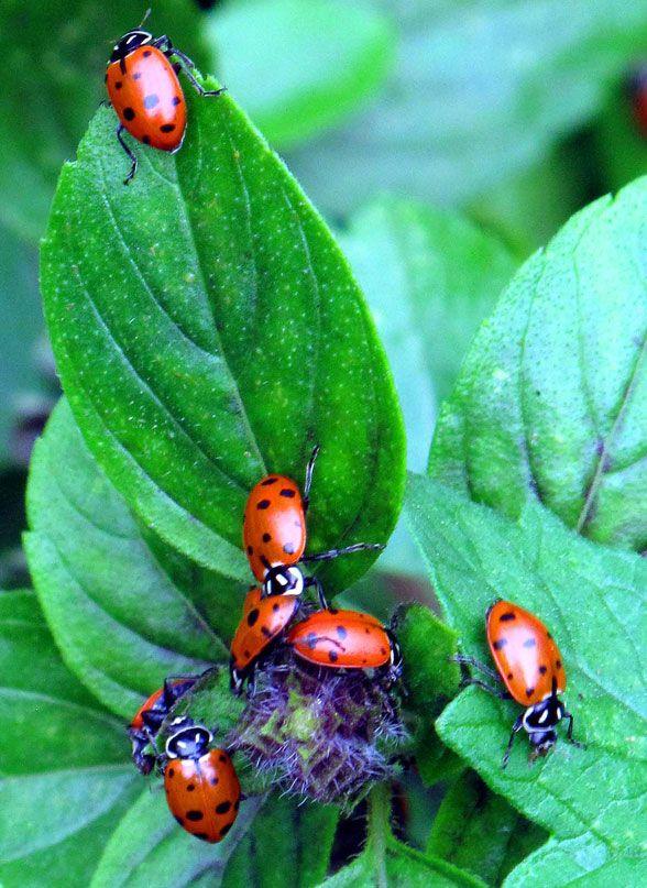 Ladybirds Invade Limpsfield: Garden, Garden Landscaping, Daffodils