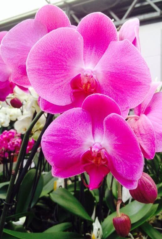 Orchidee 2014 najaar kerst kamerplanten intratuin for Intratuin cruquius