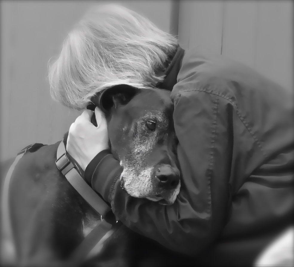 Forever in My Heart Veterinary clinic, Vet clinics, Love pet