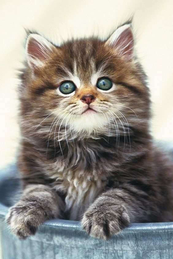 Pin By Sue Knapp On Cute Cute Cats Cats Kittens