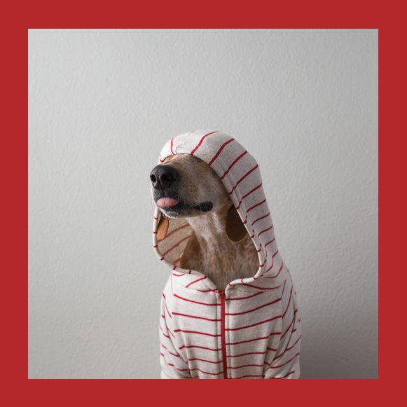 Bem Legaus!: Maddie Dog