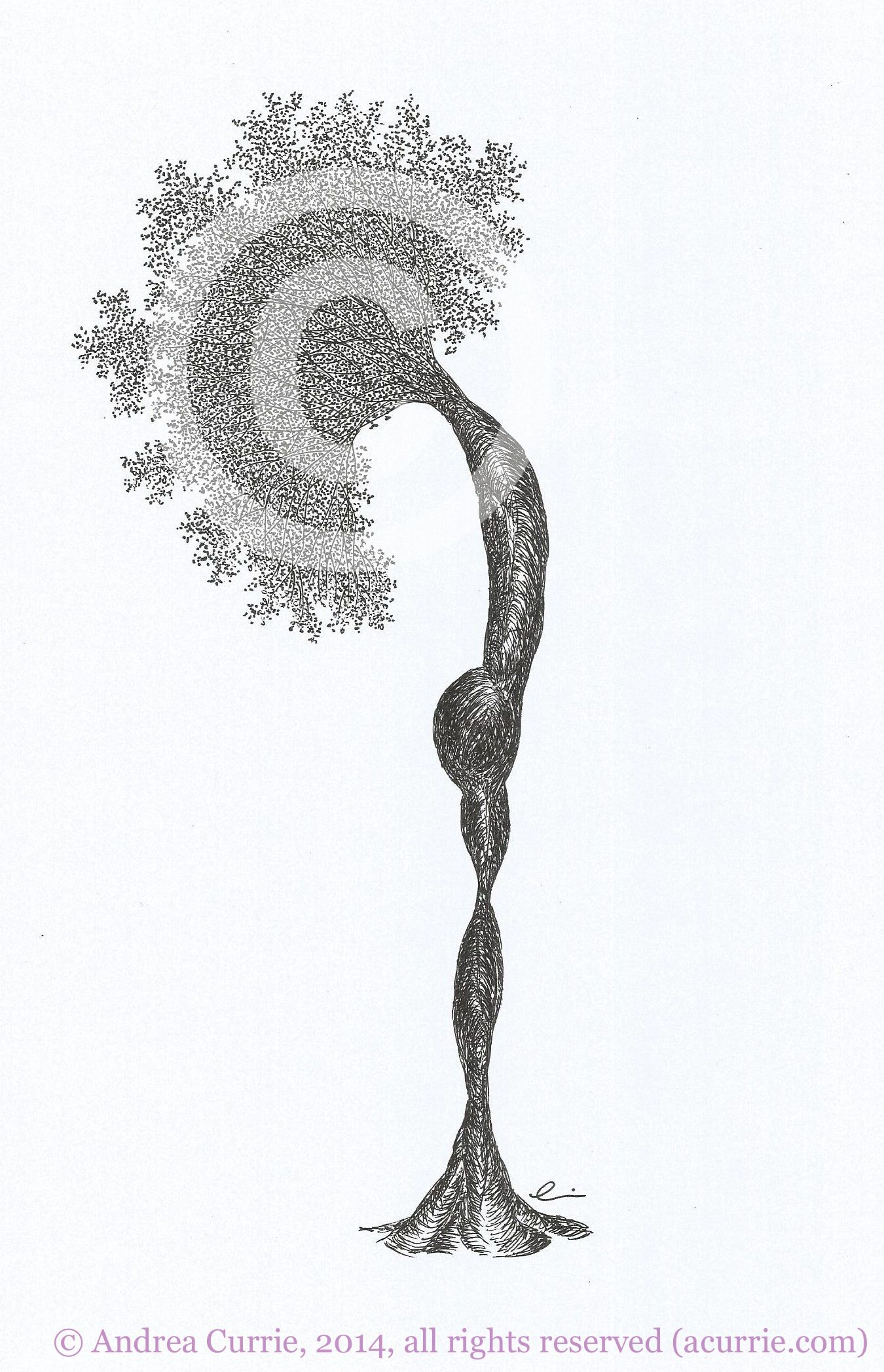 Pomonayoga Series Trees As Yoga Positions Fine Art Tree