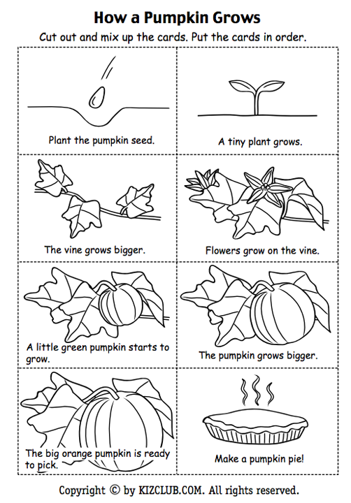 diagram pumpkin plant wiring diagram on the net life cycle of pumpkin plant life cycle of a pumpkin & apple graphic