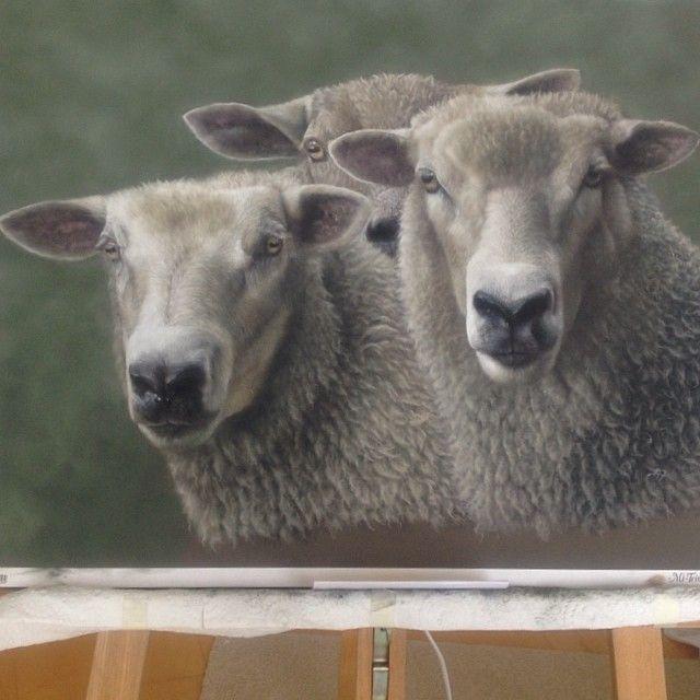 Finished. Ewes Three.  #pastel #pencil#pencilwork #photorealism #photorealistic  #sheep  #painting