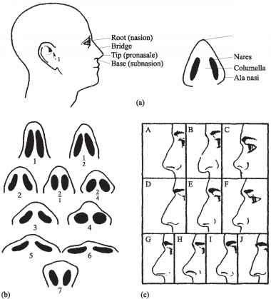 Nasal Shape Nose Shapes Nose Types Nose