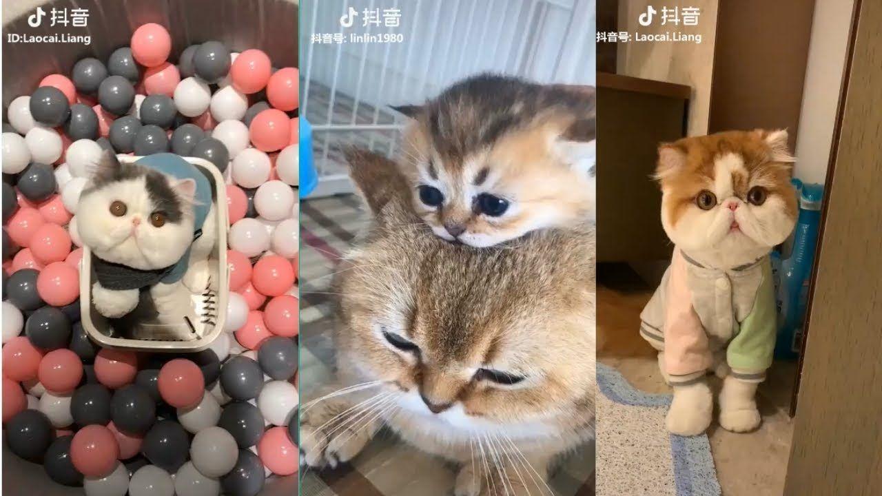 Tiktok Cat Tik Tok Funny Cat Cute Cat Videos Compilation 2019 9 A Cat Kittens Cutecats Babycat Cute Animals Images Cute Animals Cute Baby Cats