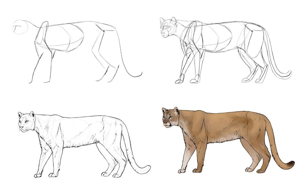 How To Draw Big Cats Lions Tigers Cheetahs And Much More With