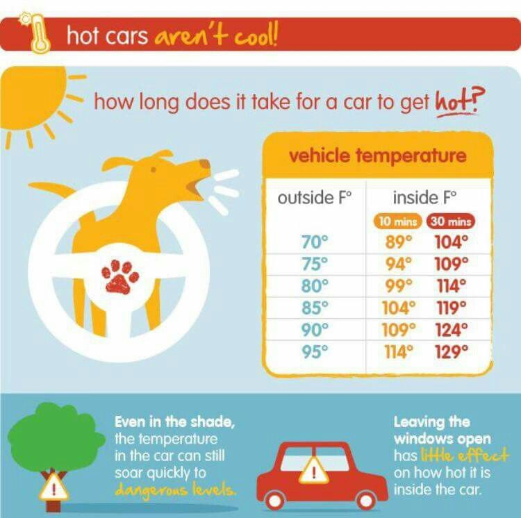 Dog safety summer safety tips pet insurance reviews