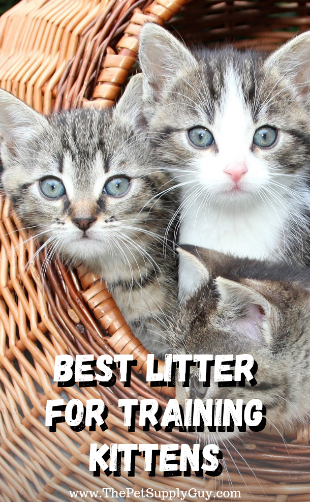 Best Litter For Training Kittens Best Litter For Kittens Kittens Litter Training Kittens