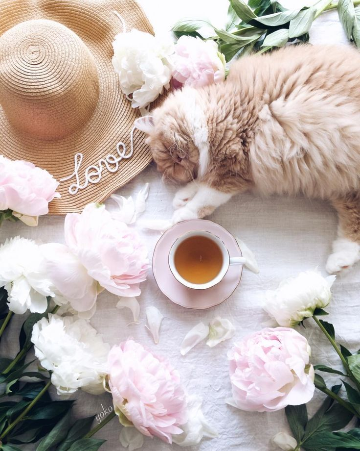 74 отметок «Нравится», 5 комментариев — Yoko🕊 (@atelierjuno) в Instagram: «July.12.2017 ・ ・ Tea or coffee?☕ ・ Happy Wednesday my dear friends☕🌸 ・ Another styling with my…»