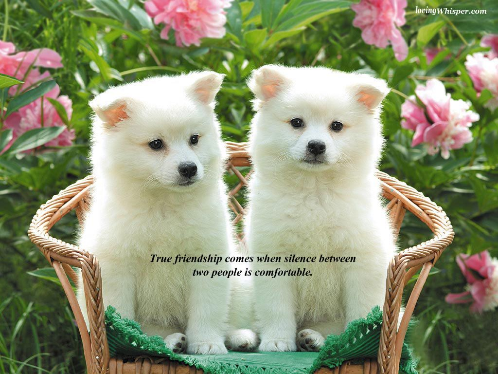 Friendship Day Sms Collection Pet Dogs Images Cute Puppy Wallpaper Cute Dog Photos
