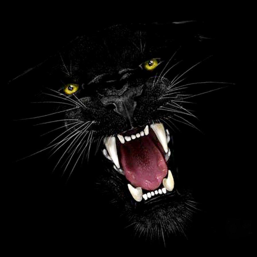 Надписью, картинки пантера черная злая