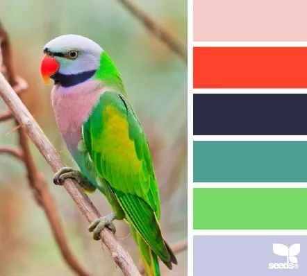 Feathered hues color palette #exotic #parrot
