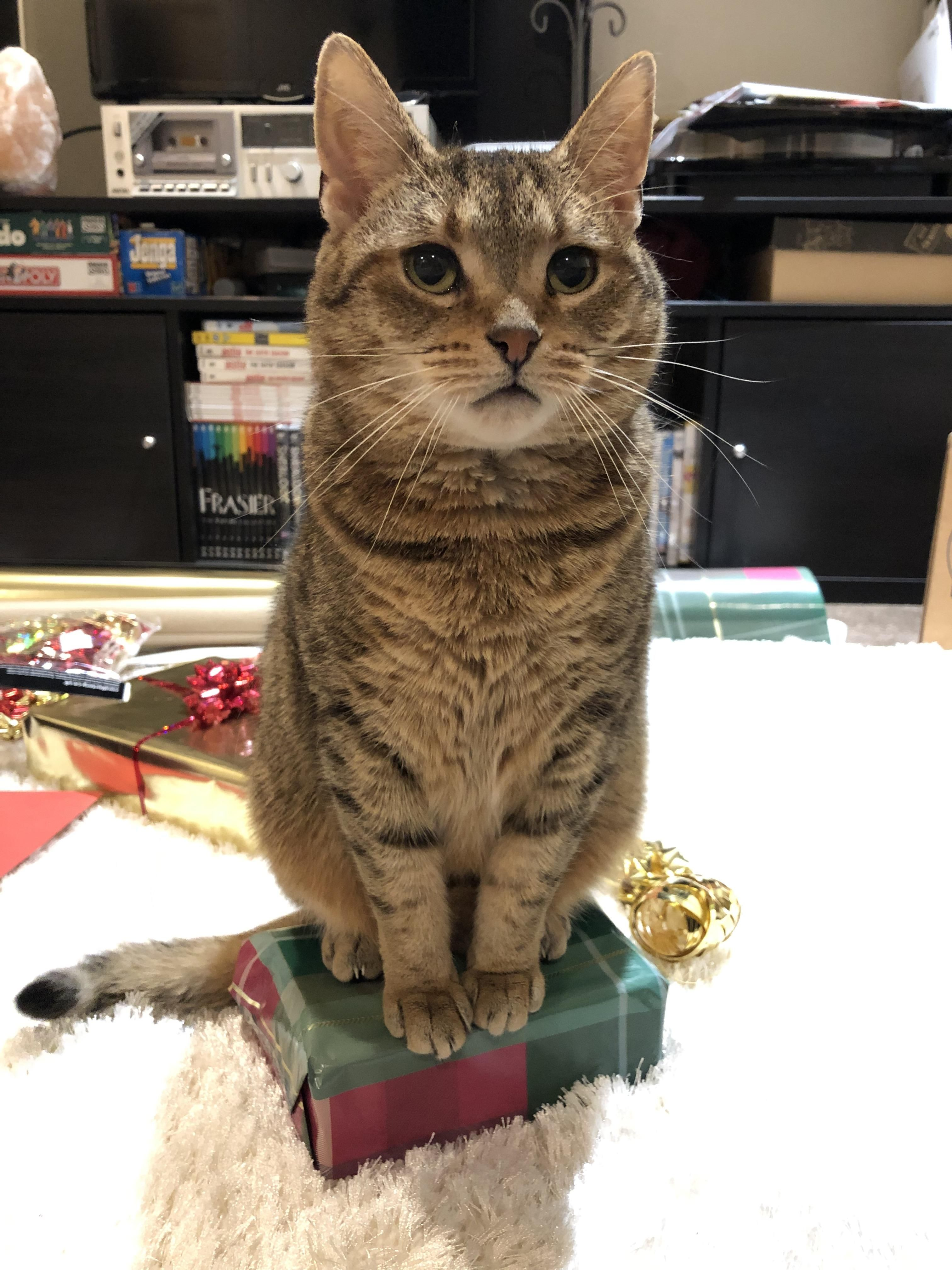 Ariel Is Helping To Wrap Presents By Sitting On Them Cats Cat Background Cats And Kittens