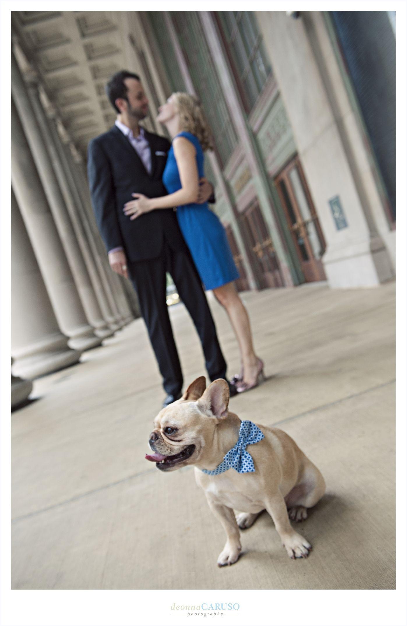 Park Art|My WordPress Blog_French Bulldog Puppies Northwest Indiana