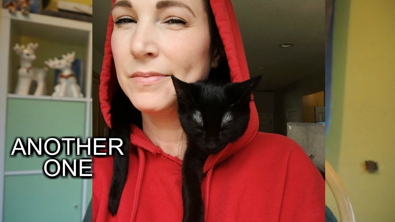 Another Kitten Vlogmas Kittens Cute Cats And Kittens Cute Cats