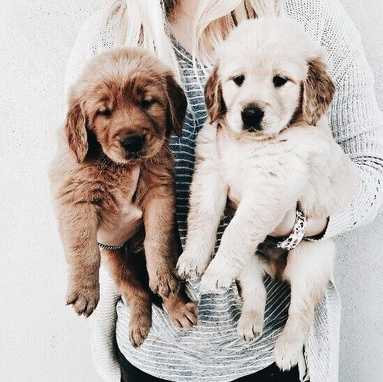 Pin By Lucy Frow On Doggo S Puppies Cute Animals Animals Friends