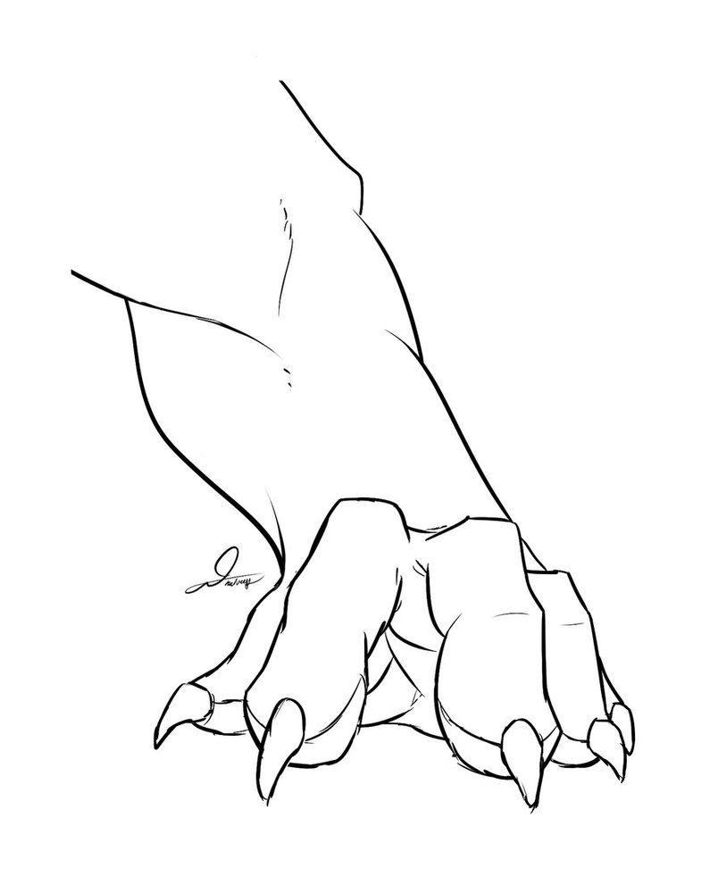 Lion Paw Drawing : drawing, Image, Result, Front, Figure, Drawing,, Drawing, Reference,