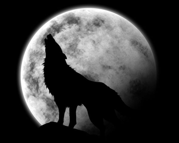 Lune Loup Tatouage Loup Hurlant Pleine Lune Loup