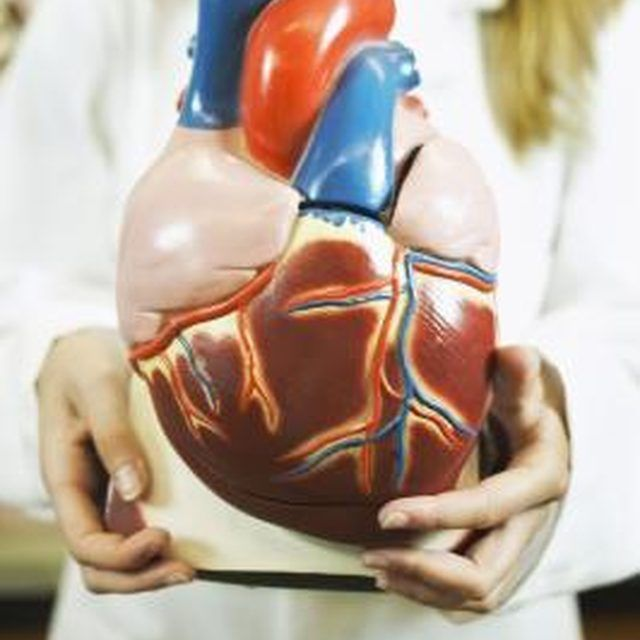 An over-sized heart model may be easier to manage for younger ...