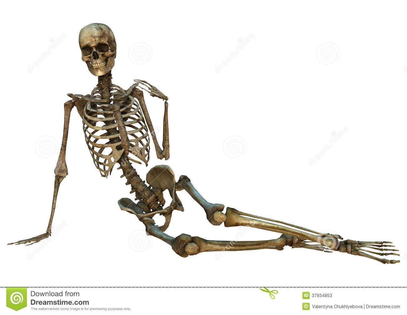 Skeletal Posture Pictures 5