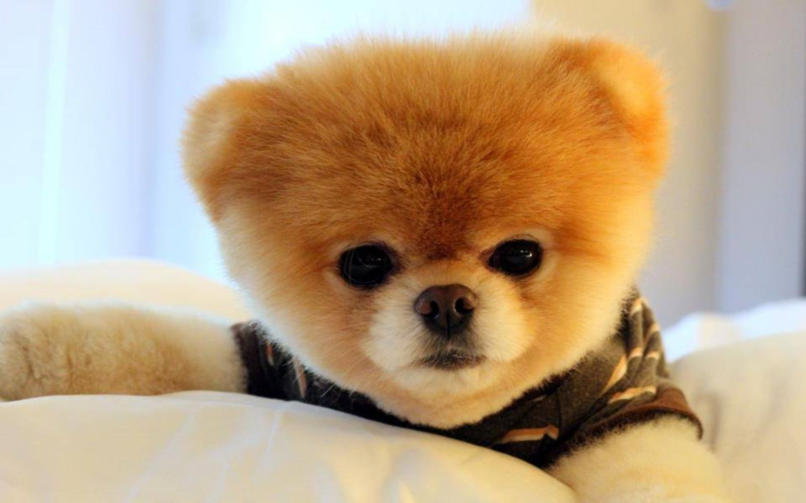 Good Boo Chubby Adorable Dog - 86f31aa26dcdc8cd474b1366f207fec1  Image_2811  .jpg