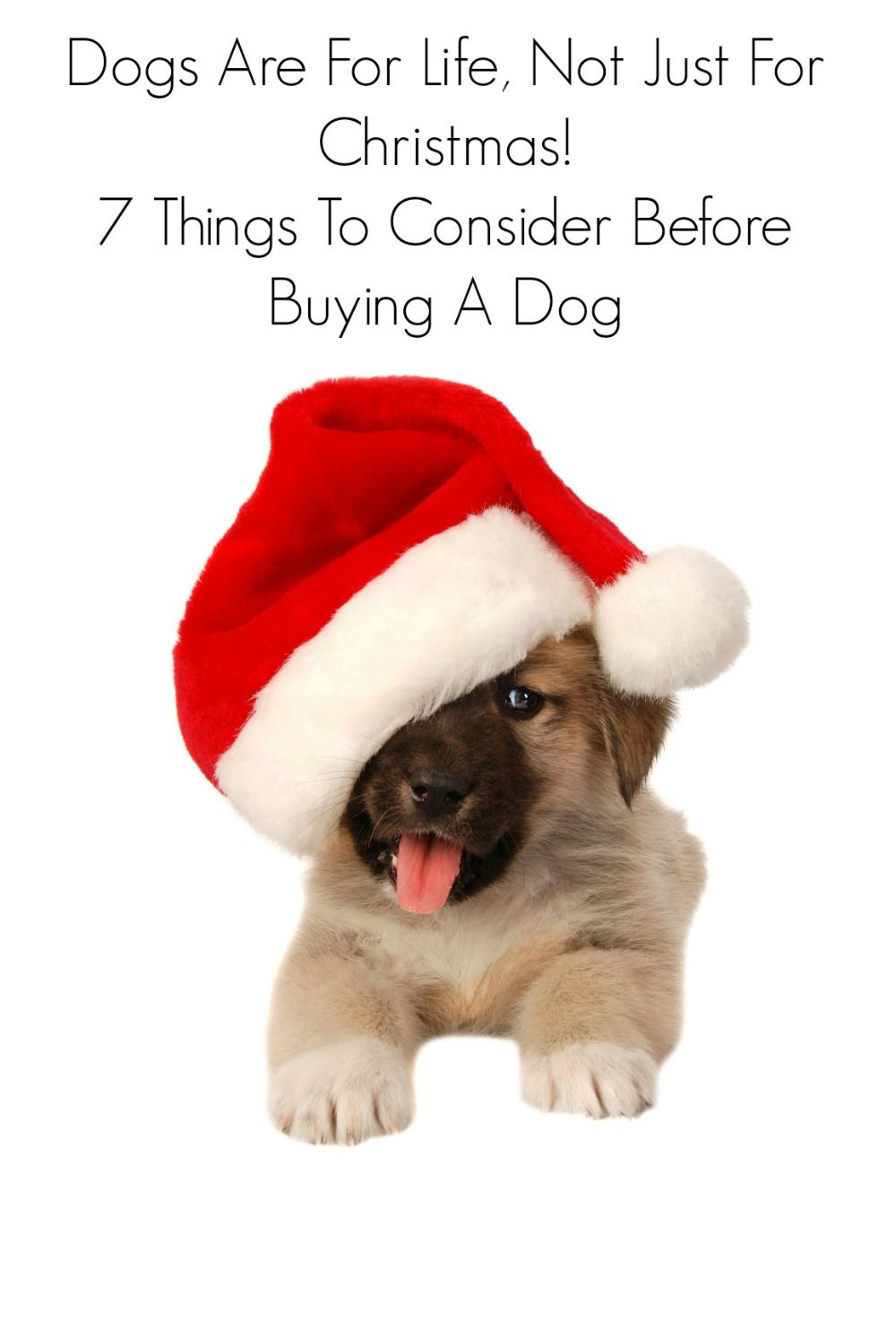 Dogs Are For Life Not Just For Christmas 7 Things To Consider