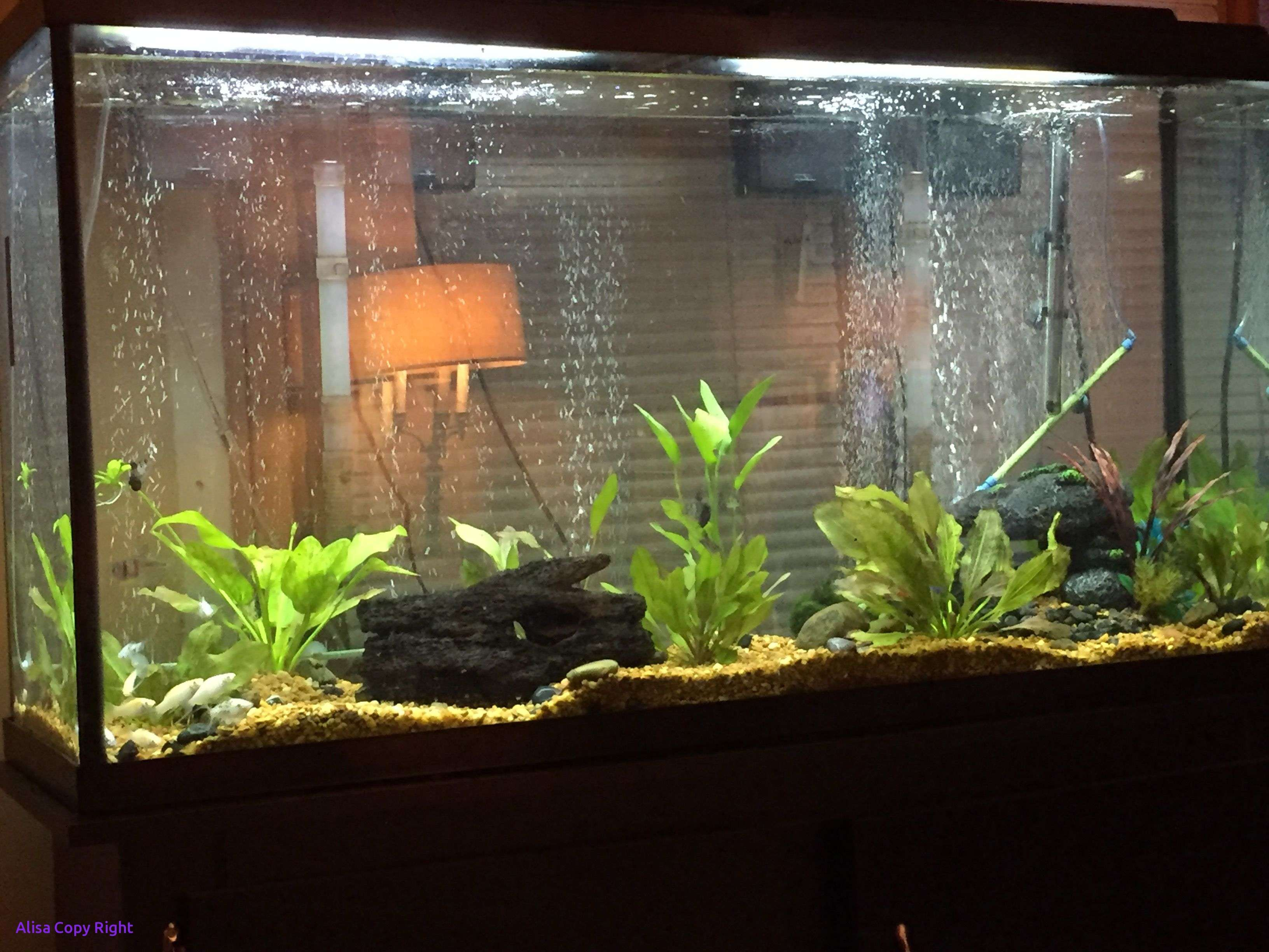 Contemporary Fish Tanks (With images) | Modern fish tank, Diy fish tank, Fish tank