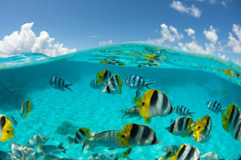 Bora Bora -- looks like a snorkeling paradise
