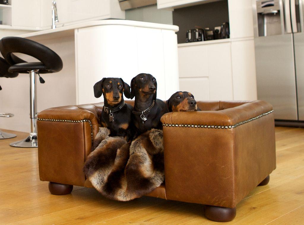 Bon Luxury Dog Beds U0026 Designer Dog Sofas As Seen On The Apprentice | Scottu0027s Of  London