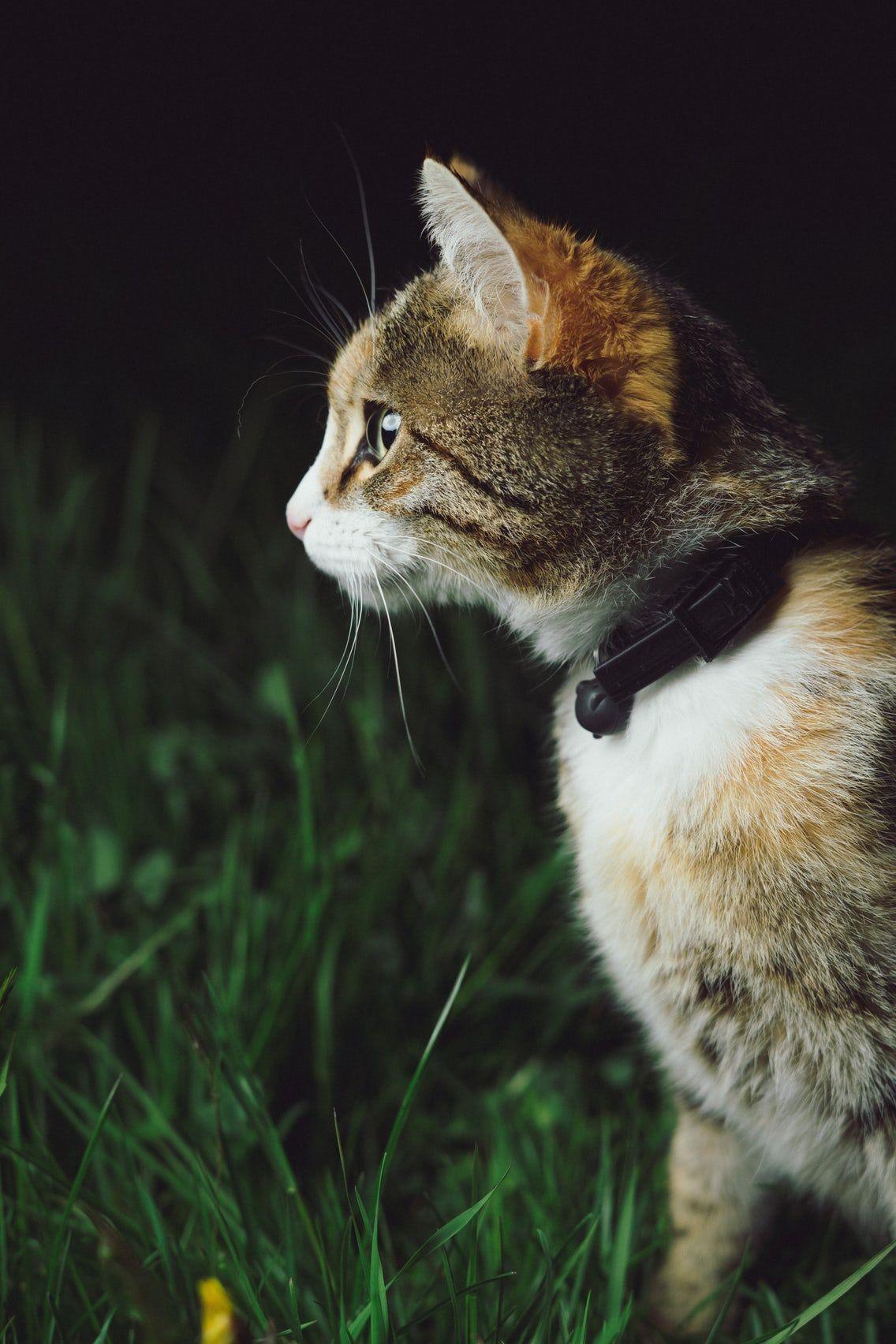 Cats Cat Cat Photography Katzen Tiere Und Katzenrassen
