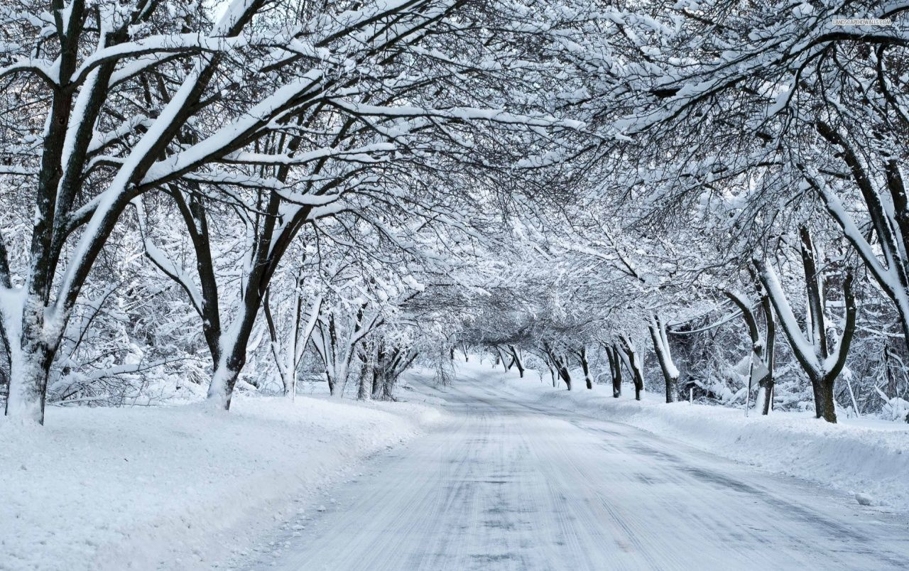 Thick Snowy Trees & White Road wallpapers