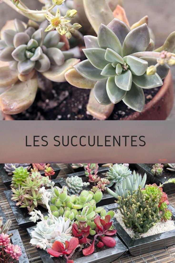 Comment faire durer succulentes et plantes grasses ...