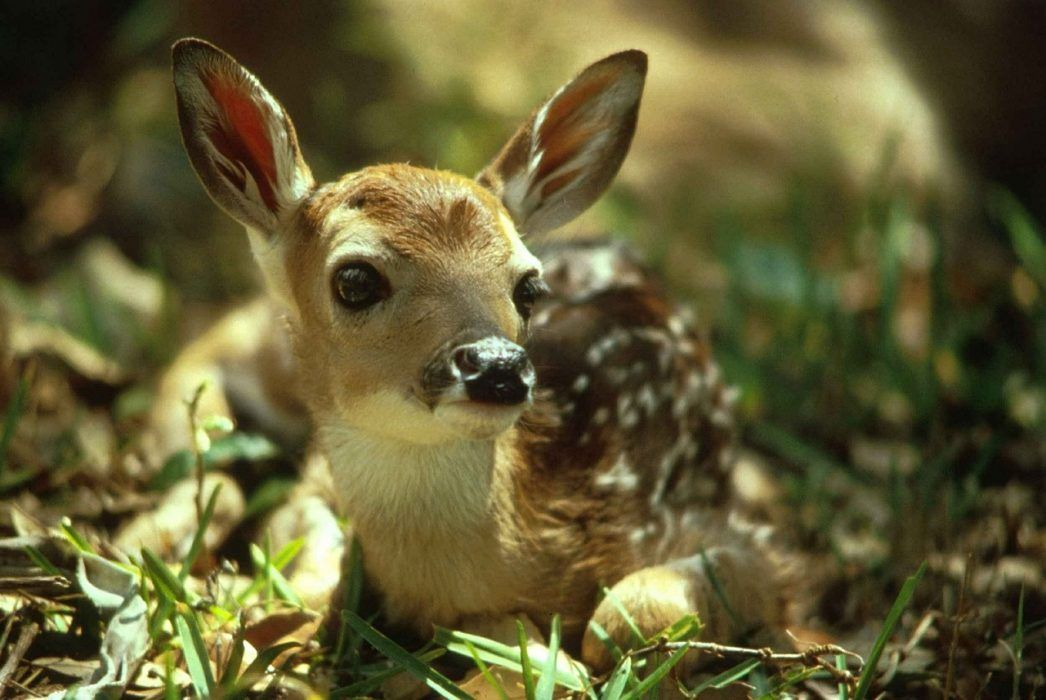 22 Adorable Baby Animals That Will Melt Your Cold Heart
