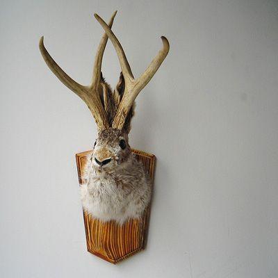 Snork 気に入ったインテリアやソファ 雑貨を紹介 鹿の剥製 剥製 壁掛け