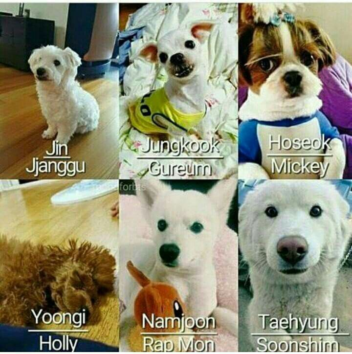 Jungkook S Dog Name