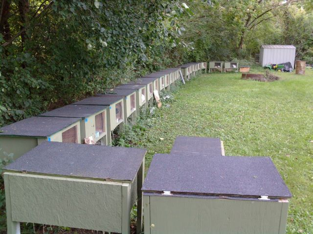 Housing meat rabbits this is what is wrong with for How to make a rabbit hutch from scratch